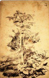 MAMOEIRO - ESTUDO - BICO DE PENA/PAPEL - 23,5 x 15 cm - c.1889 - MUSEU ANTONIO PARREIRAS/NITEROI/RJ
