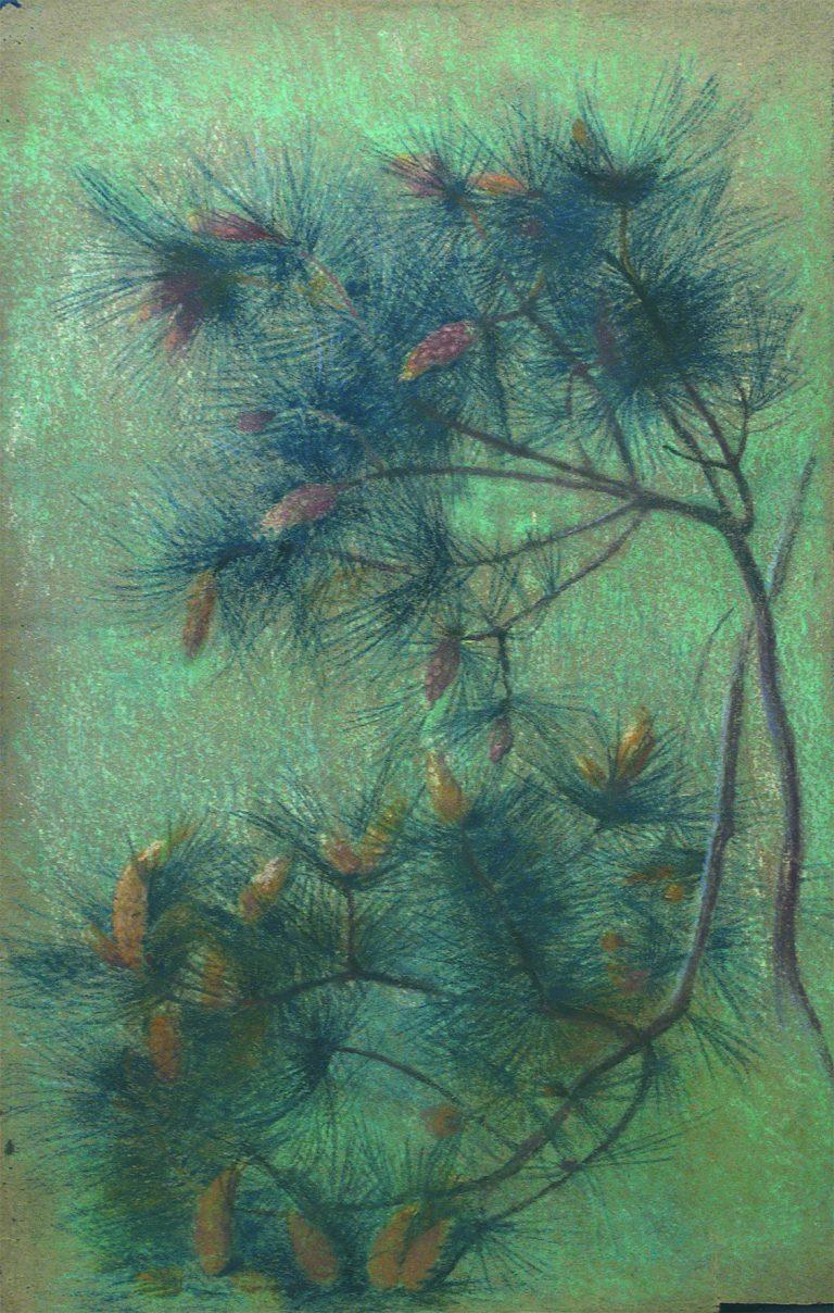 GALHOS DE PINHEIRO - ESTUDO PARA TECIDO - CRAYON E GIZ/PAPEL - 50 x 33 cm - c.1899 - COLEÇÃO PARTICULAR