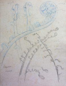 BROTO DE SAMAMBAIA - ESTUDO - LÁPIS E BICO DE PENA S/ PAPEL - 27 x 21 cm - c.1896 - COLEÇÃO PARTICULAR