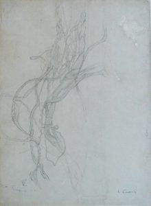 GALHOS ENTRELAÇADOS - ESTUDO - CRAYON S/ PAPEL - 31 x 24 cm - 1901 - COLEÇÃO PARTICULAR