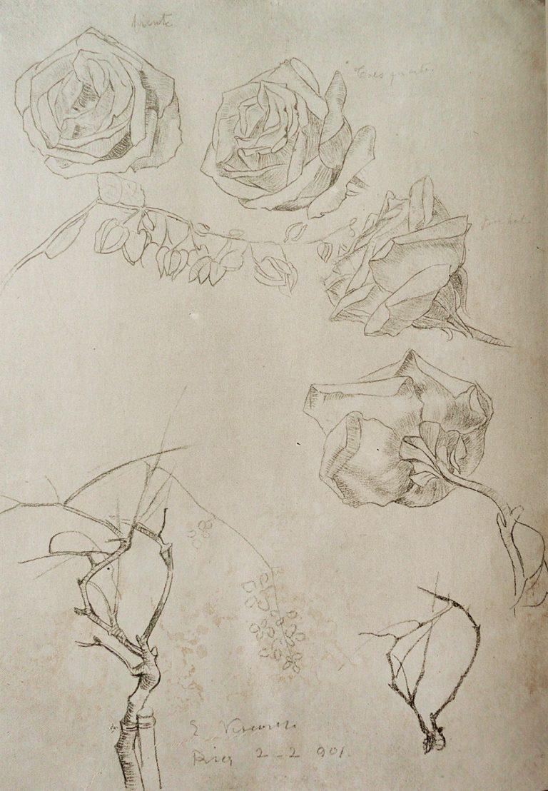 ROSAS DO MEU JARDIM - CRAYON/PAPEL - 1901 - LOCALIZAÇÃO DESCONHECIDA
