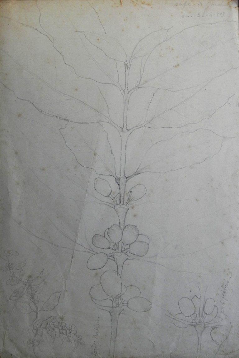 CAFÉ DO JARDIM - GRAFITE S/ PAPEL - 32 x 21 cm - 1903 - COLEÇÃO PARTICULAR