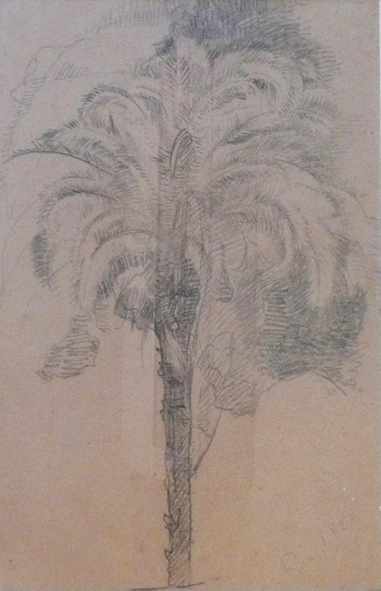 PALMEIRA - CRAYON S/ PAPEL - 26 x 19 cm - 1923 - COLEÇÃO PARTICULAR