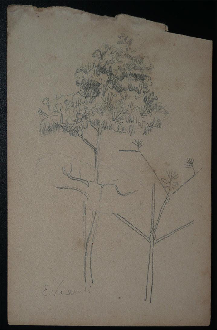 ARBUSTOS - CRAYON S/ PAPEL - 16,0 x 10,5 cm - c.1902 - DESMEMBRADO DE UM CADERNO DE ANOTAÇÕES - COLEÇÃO PARTICULAR