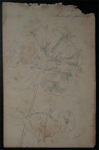 FLORES - CRAYON S/PAPEL - 16,0 x 10,5 cm - 1902 - DESMEMBRADO DE UM CADERNO DE ANOTAÇÕES - COLEÇÃO PARTICULAR
