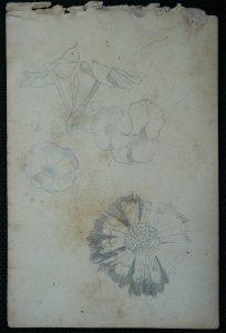 FLORES - CRAYON S/ PAPEL - 16,0 x 10,5 cm - c.1900 - DESMEMBRADO DE UM CADERNO DE ANOTAÇÕES - COLEÇÃO PARTICULAR