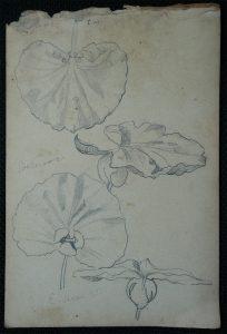 FOLHAS - CRAYON S/ PAPEL - 16,0 x 10,5 cm - c.1902 - DESMEMBRADO DE UM CADERNO DE ANOTAÇÕES - COLEÇÃO PARTICULAR