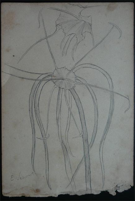 PISTILOS - CRAYON S/ PAPEL - 16,0 x 10,5 cm - c.1902 - DESMEMBRADO DE UM CADERNO DE ANOTAÇÕES - COLEÇÃO PARTICULAR