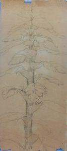 VEGETAL - VERSO DA OBRA D969 - CRAYON SOBRE PAPEL - 52 x 23 cm - c.1896 - COLEÇÃO PARTICULAR