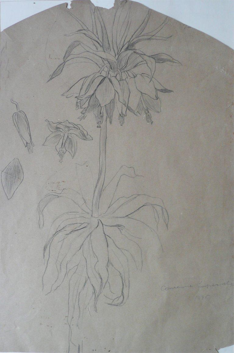 COROA IMPERIAL - CRAYON SOBRE PAPEL - 56 x 37 cm - 1896 - COLEÇÃO PARTICULAR