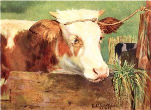 NOVILHO - OST - 65 x 85 cm - 1889 - COLEÇÃO PARTICULAR