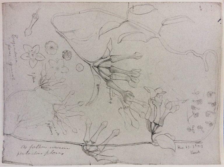 IPOMÉIA - GRAFITE SOBRE PAPEL - 31,0 x 23,0 cm - 1913 - LOCALIZAÇÃO DESCONHECIDA