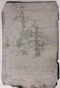 PINHEIRO - FUSAIN SOBRE PAPEL - 60,0 x 48,0 cm - 1899 - LOCALIZAÇÃO DESOCNHECIDA