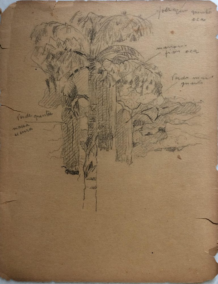 PALMEIRA - CARVÃO SOBRE PAPEL - 31,3 x 24,0 cm - c.1920 - COLEÇÃO PARTICULAR