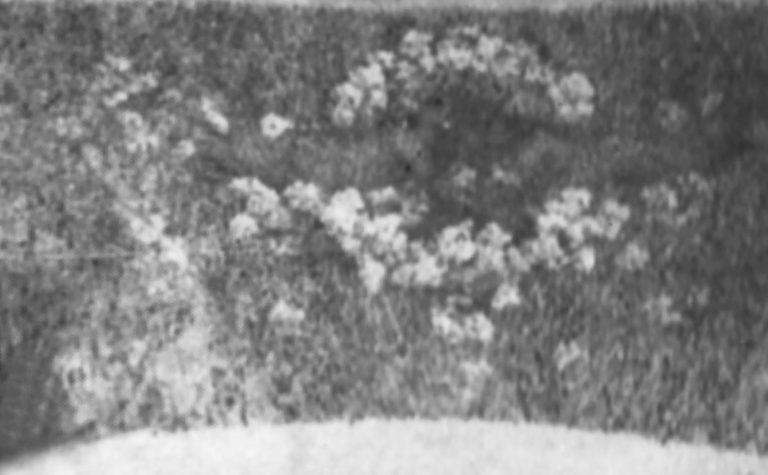 DECORAÇÃO DAS ARCADAS DA SALA DE ESPETÁCULOS DO THEATRO MUNICIPAL DO RIO DE JANEIRO - PAINEL 2 - OST - 3,0 x 5,0 m (aprox.) - c.1915 - OBRA DESAPARECIDA